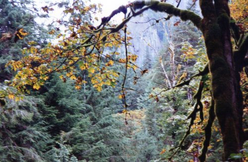 Princess Louisa Inlet Forest 2