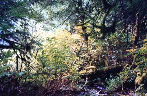 Princess Louisa Inlet Forest 3