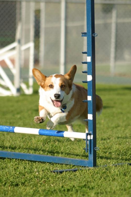 Jumping II