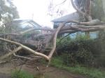 Tree Down 4