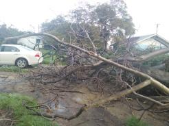 Tree Down 5